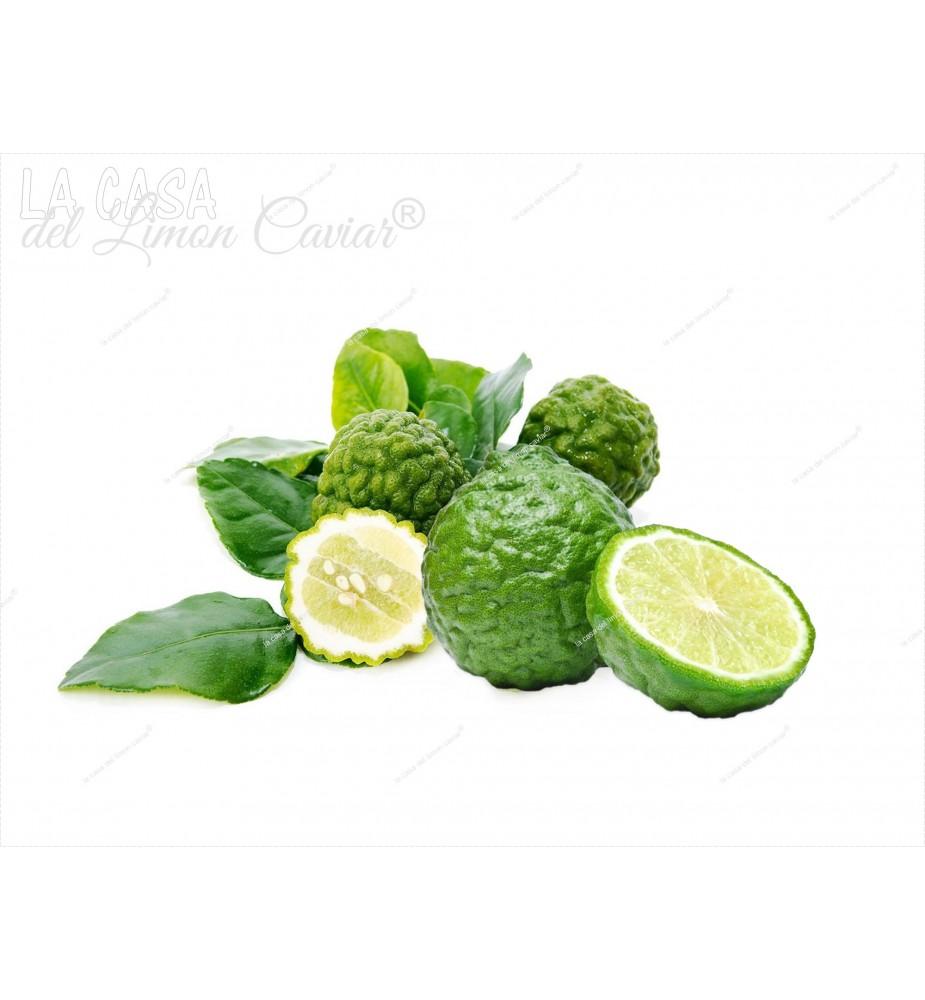 COMBAVA ou Citrus hystrix ou KAFFIR
