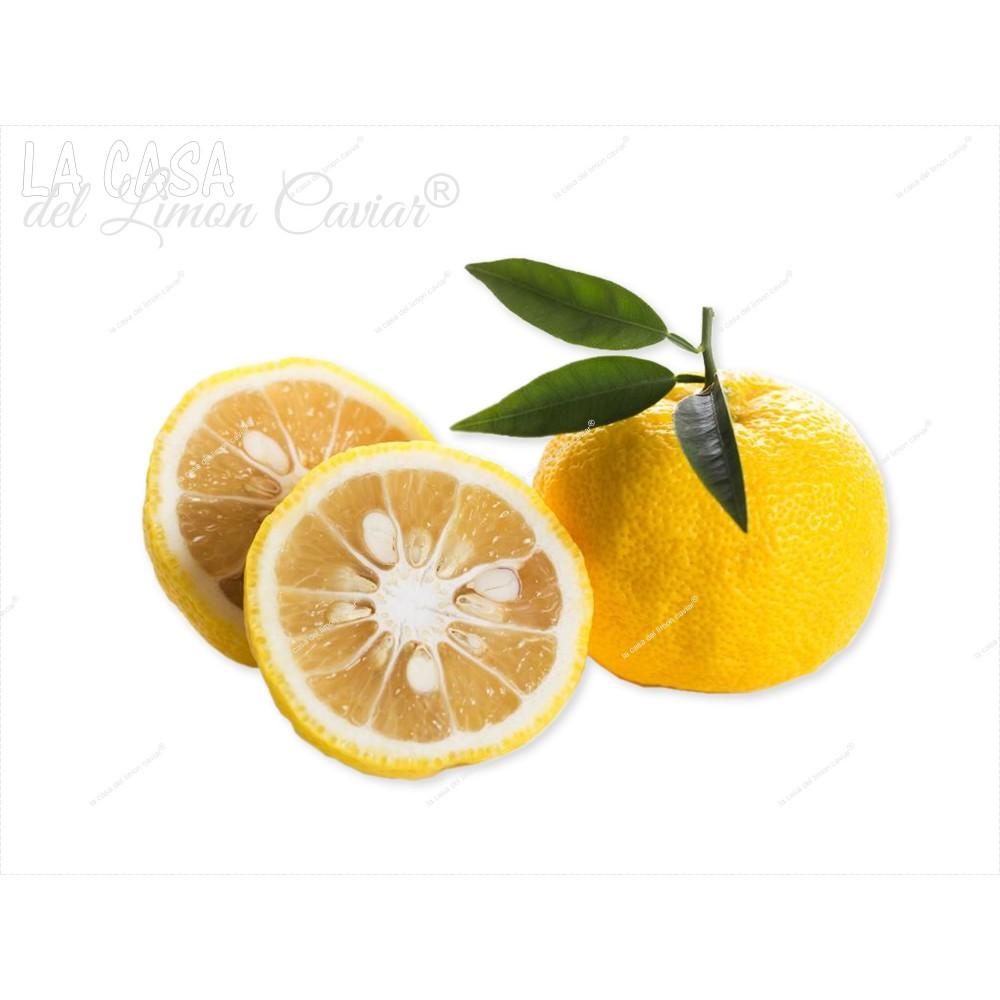 vente yuzu - citrus juno