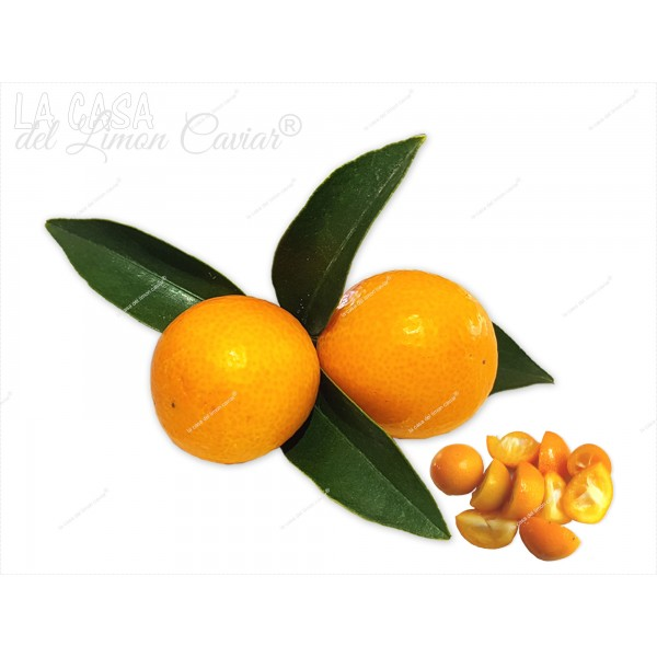 sale KUMQUAT - Meiwa Caramelo - Fruit