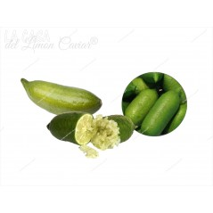 Citron Caviar LIM-ICE - FAUSTRIM - Fruit