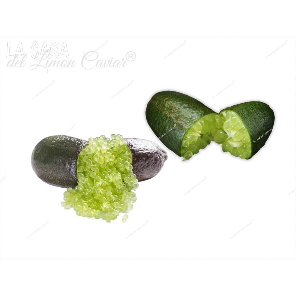 Caviar Citrico VERDE-LUZ - Fruita