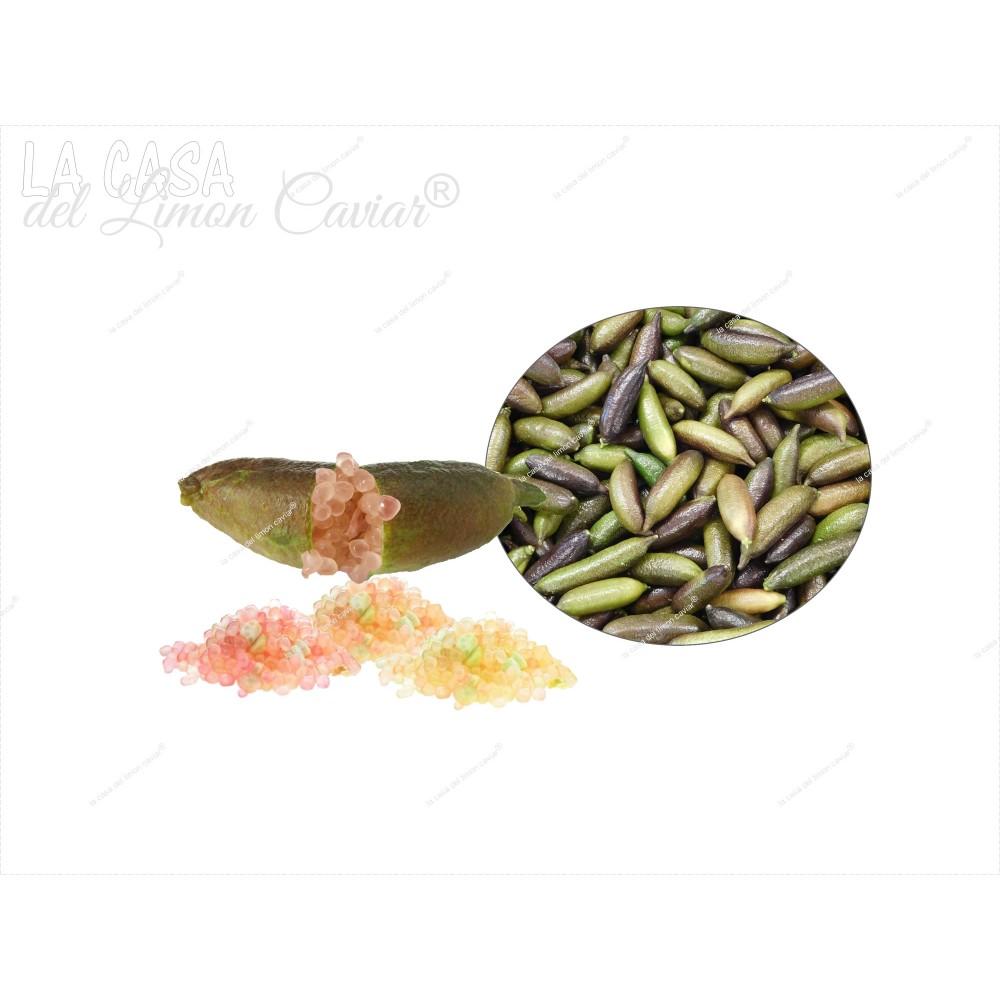 Caviar Citrico MIELE - Fruita