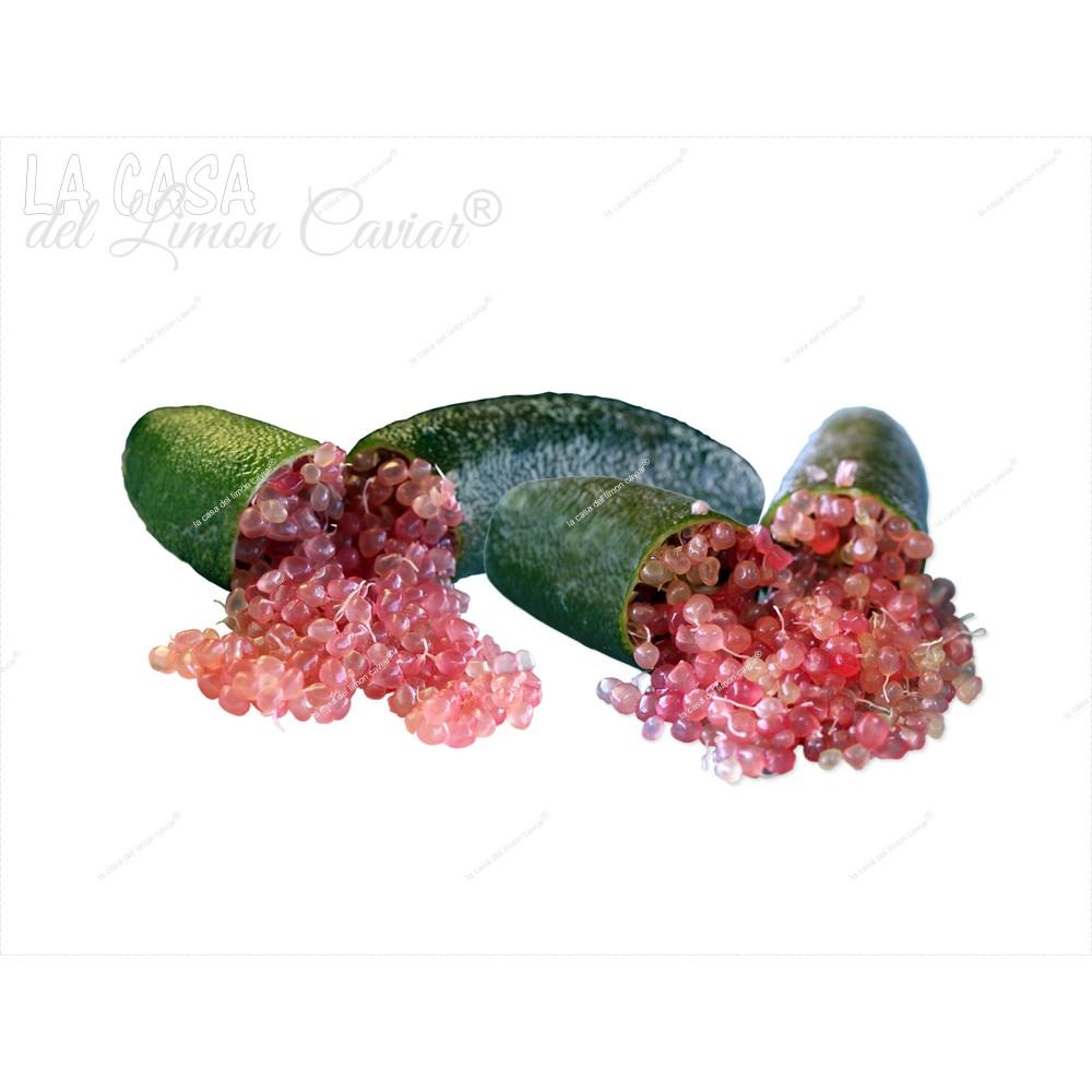 Caviar Citrico SLICE-ICE -...