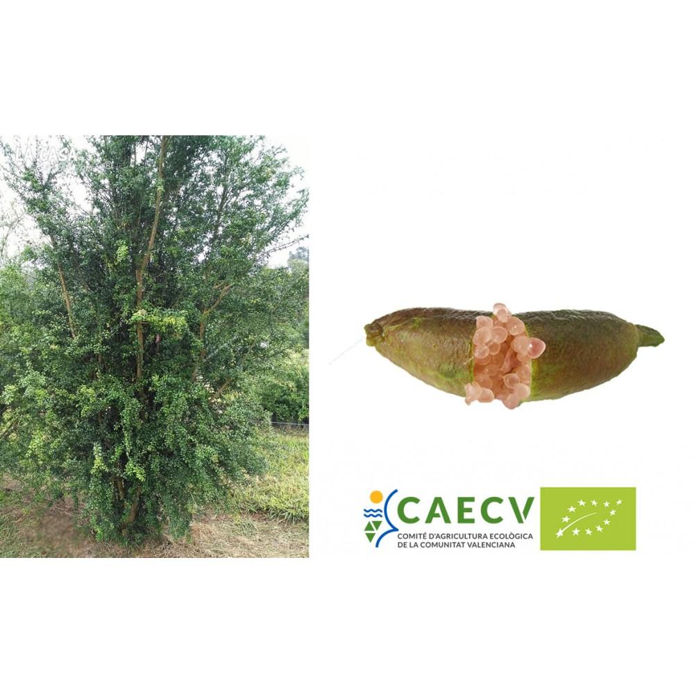 parrainer un arbre fruitier