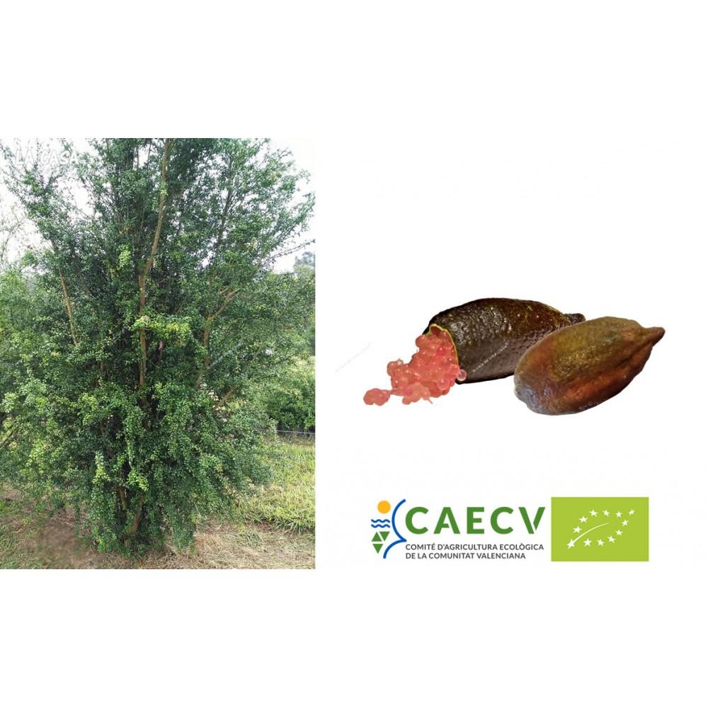 Adopta un árbol frutal de...