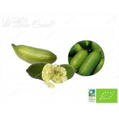 Citron Caviar LIM-ICE