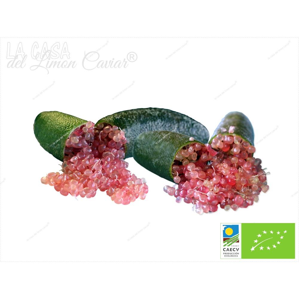 caviar citrico SLICE-ICE