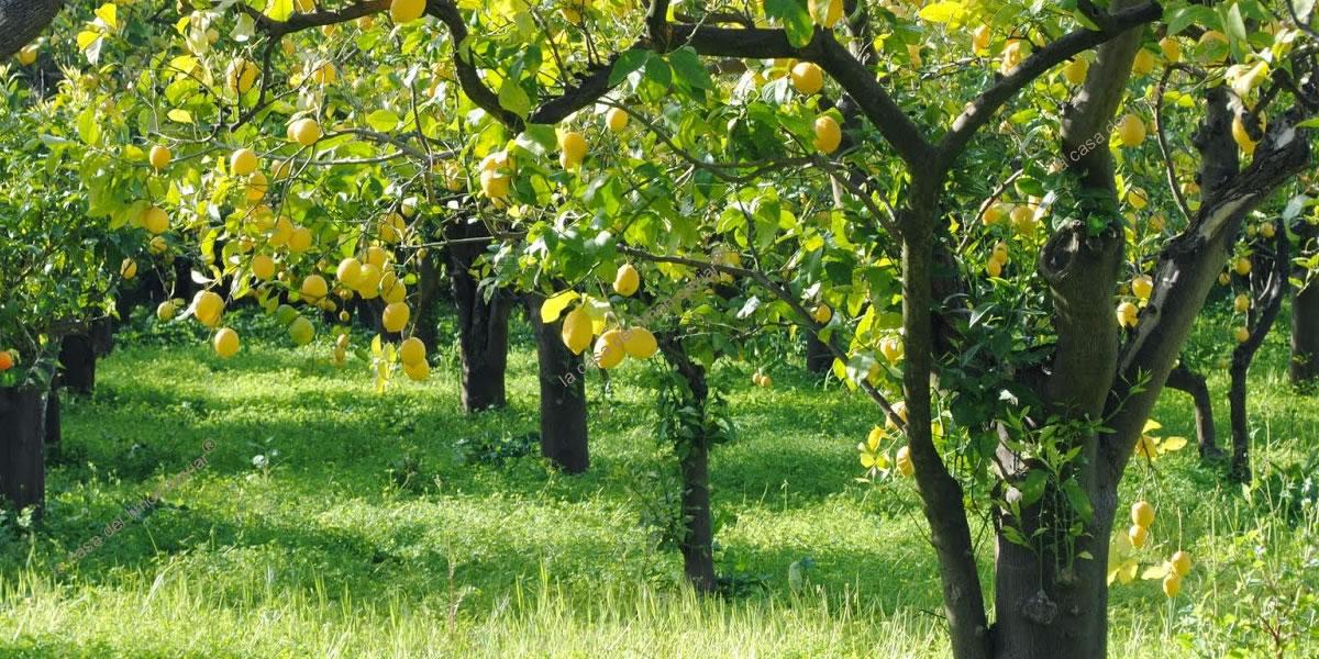 Le Jardin de La casa del limon