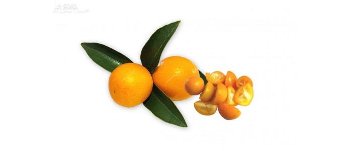 KUMQUAT Golden Orange