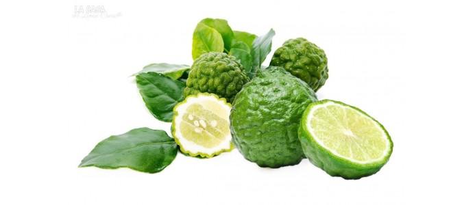 The Citrus hystrix or Combawa