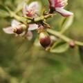 Bouton floral, fleurs, nouaison, bientôt les fruits ... Vous devriez dès maintenant réserver vos fruits sur notre site Web, pour être sûr d'en avoir .  Capullo, flores, cuajado, pronto fruto ... Ahora debes reservar tu fruta en nuestra web, para asegurarte de tener alguna.  Flower bud, flowers, fruit set, soon fruit ... You should now reserve your fruit on our website, to be sure you have some.  Blomsterknop, blomster, frugtsæt, snart frugt ... Du skal nu reservere din frugt på vores hjemmeside for at være sikker på at du har nogle.  #Citroncaviar #Dessert #Fruit #Agriculturebiologique  #Fruitsfrais #Sanspesticides #VergersEcoresponsables #HVE ... #Caviardelimonecológico #Postre #Frutaecológico #Agriculturaecológico #Sinpesticidas #caviarcitricos  ... #Lemoncaviarorganic #fingerlime #Organicfruit #Organicfarming #healthyfood ... #Citronkaviar #Økologisk #Sundmad #landbrug #grøntsager #frugter ... #Zitronen #Bioobst #GesundEssen #Biologische #fruchte
