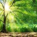 Nuestro clima está alterado, fenómenos meteorológicos extremos, brutalidad de las estaciones, calor extremo más frecuente, restricciones de agua para riego, nuestros árboles y ecosistemas están sufriendo. Seamos todos eco-responsables 🌱☀️  Notre climat se dérègle, phénomènes météo extrêmes, brutalité des saisons, chaleurs extrêmes plus fréquentes, restrictions d'eau pour l'irrigation, nos arbres et les écosystèmes souffrent. Soyons tous éco responsables 🌱☀️  Our climate is disrupted, extreme weather phenomena, brutality of the seasons, more frequent extreme heat, water restrictions for irrigation, our trees and ecosystems are suffering. Let's all be eco-responsible 🌱☀️  #Citroncaviar #Dessert #Fruit #Agriculturebiologique  #Fruitsfrais #Sanspesticides #VergersEcoresponsables #HVE ... #Caviardelimonecológico #Postre #Frutaecológico #Agriculturaecológico #Sinpesticidas #caviarcitricos  ... #Lemoncaviarorganic #fingerlime #Organicfruit #Organicfarming #healthyfood ... #Citronkaviar #Økologisk #Sundmad #landbrug #grøntsager #frugter ... #Zitronen #Bioobst #GesundEssen #Biologische #fruchte  🎯 : www.lacasadelimon.com  ✉️ : ventas@lacasadelimon.com  📲 : +34 961.043.071  WhatsApp : +34 605 271 480   ◦•●◉✿ LA CASA DEL LIMON DE CAROLINA S.L ✿◉●•◦