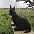 Nos deux chiens de garde surveillent notre champ. Nous sommes rassurés 😁  Nuestros dos perros guardianes vigilan nuestro campo. Estamos tranquilos 😁  Our two guard dogs watch our field. We are reassured 😁  Unsere beiden Wachhunde beobachten unser Feld. Wir sind beruhigt 😁  Vores to vagthunde holder øje med vores mark. Vi er beroliget 😁  #perros #Citroncaviar #Dessert #Fruit #Agriculturebiologique  #Fruitsfrais #Sanspesticides ... #Caviardelimonecológico #Postre #Frutaecológico #Comidasaludable #Agriculturaecológico #Sinpesticidas  #Scottish #chien #perrosdeinstagram