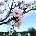 Eso es todo, aquí vamos de nuevo. Primavera pronto. Ça y est, c'est reparti. Le printemps bientôt. That's it, here we go again. Spring soon. Das war's, jetzt geht es wieder los. Frühling bald. Det er det, her går vi igen. Forår snart.  #Citroncaviar #Dessert #Fruit #Agriculturebiologique  #Fruitsfrais #Sanspesticides ... #Caviardelimonecológico #Postre #Frutaecológico #Comidasaludable #Agriculturaecológico #Sinpesticidas ... #Lemoncaviarorganic #fingerlime #Organicfruit #Organicfarming #Organic #healthyfood ... #Citronkaviar #Økologisk #Sundmad #landbrug #grøntsager #frugter ... #Zitronen #Bioobst #GesundEssen #Biologische #fruhstuck #fruchte