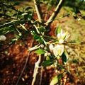 Y sí, este fin de semana plantamos los árboles Faustrim que encargamos en 2018. Paciencia. Este limón híbrido de caviar también es muy popular por sus aromas potentes, frescos y de lima. Ahora varios cientos de árboles, más de 9 variedades de caviar de limón. ¿Quién es el especialista? 😁  Et oui, nous avons planté ce week-end les arbres Faustrim que nous avions commandé en 2018. Patience. Ce Citron Caviar hybride est aussi très apprécié par ses arômes puissants, frais et lime. Maintenant, plusieurs centaines d'arbres, plus de 9 variétés de Citrons Caviar . Qui c'est le spécialiste ? 😁  And yes, this weekend we planted the Faustrim trees that we ordered in 2018. Patience. This Caviar lemon hybrid is also very popular with its powerful, fresh and lime aromas. Now several hundred trees, more than 9 varieties of Lemons Caviar. Who is the specialist? 😁  Og ja, denne weekend plantede vi Faustrim-træerne, som vi bestilte i 2018. Tålmodighed. Denne kaviar hybrid citron er også meget populær med sine kraftige, friske og lime aromaer. Nu flere hundrede træer, mere end 9 sorter af citroner kaviar. Hvem er specialisten? 😁  #Citroncaviar #Dessert #Fruit #Agriculturebiologique  #Fruitsfrais #Sanspesticides #VergersEcoresponsables #HVE ... #Caviardelimonecológico #Postre #Frutaecológico #Agriculturaecológico #Sinpesticidas #caviarcitricos  ... #Lemoncaviarorganic #fingerlime #Organicfruit #Organicfarming #healthyfood ... #Citronkaviar #Økologisk #Sundmad #landbrug #grøntsager #frugter ... #Zitronen #Bioobst #GesundEssen #Biologische #fruchte