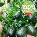 Bonjour, ca y est , la récolte est commencée pour la variété AUSTRAL-ICE.  Nous attendons vos commandes. Le prix est le même que l'année passée. Nous sommes à votre écoute,  Hola, ya está, ha comenzado la cosecha para la variedad AUSTRAL-ICE. Estamos esperando sus pedidos. El precio es el mismo que el del año pasado. Te estamos escuchando,  LA CASA DEL LIMON DE CAROLINA email: ventas@lacasadelimon.com Tel : +34 605 271 480  #Citroncaviar #Dessert #Fruit #Agriculturebiologique  #Fruitsfrais #Sanspesticides #VergersEcoresponsables #HVE ... #Caviardelimonecológico #Postre #Frutaecológico #Agriculturaecológico #Sinpesticidas #caviarcitricos  ... #Lemoncaviarorganic #fingerlime #Organicfruit #Organicfarming #healthyfood ... #Citronkaviar #Økologisk #Sundmad #landbrug #grøntsager #frugter ... #Zitronen #Bioobst #GesundEssen #Biologische #fruchte  🎯 : www.lacasadelimon.com  ✉️ : ventas@lacasadelimon.com  📲 Y WhatsApp : +34 605 271 480   ◦•●◉✿ LA CASA DEL LIMON DE CAROLINA S.L ✿◉●•◦