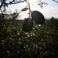 Un regard, une inspiration, un arôme incroyable, un citron caviar. 🌱  Una mirada, una inspiración, un aroma increíble, un caviar de limón.🌱  A look, an inspiration, an incredible aroma, a lemon caviar.🌱  #Citroncaviar #Dessert #Fruit #Agriculturebiologique  #Fruitsfrais #Sanspesticides #VergersEcoresponsables #HVE ... #Caviardelimonecológico #Postre #Frutaecológico #Agriculturaecológico #Sinpesticidas #caviarcitricos  ... #Lemoncaviarorganic #fingerlime #Organicfruit #Organicfarming #healthyfood ... #Citronkaviar #Økologisk #Sundmad #landbrug #grøntsager #frugter ... #Zitronen #Bioobst #GesundEssen #Biologische #fruchte  🎯 : www.lacasadelimon.com  ✉️ : ventas@lacasadelimon.com  📲 Y WhatsApp : +34 605 271 480   ◦•●◉✿ LA CASA DEL LIMON DE CAROLINA S.L ✿◉●•◦
